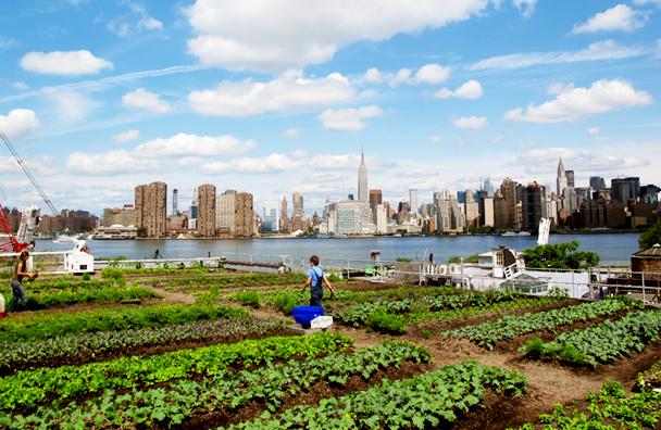 urban farming2