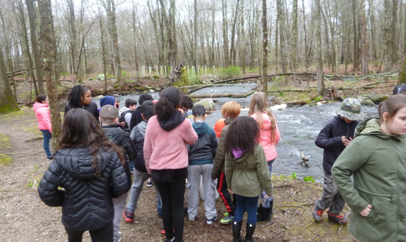 Bringing Trout Home: P.S. 110 Students Release Trout into the Cross River