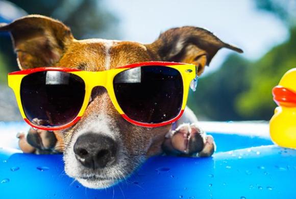 Hardly the Dog Days of Summer!
