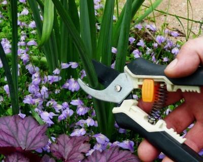 growing-daffodil-bulbs-sidewalk-tree-pits-need-know-4