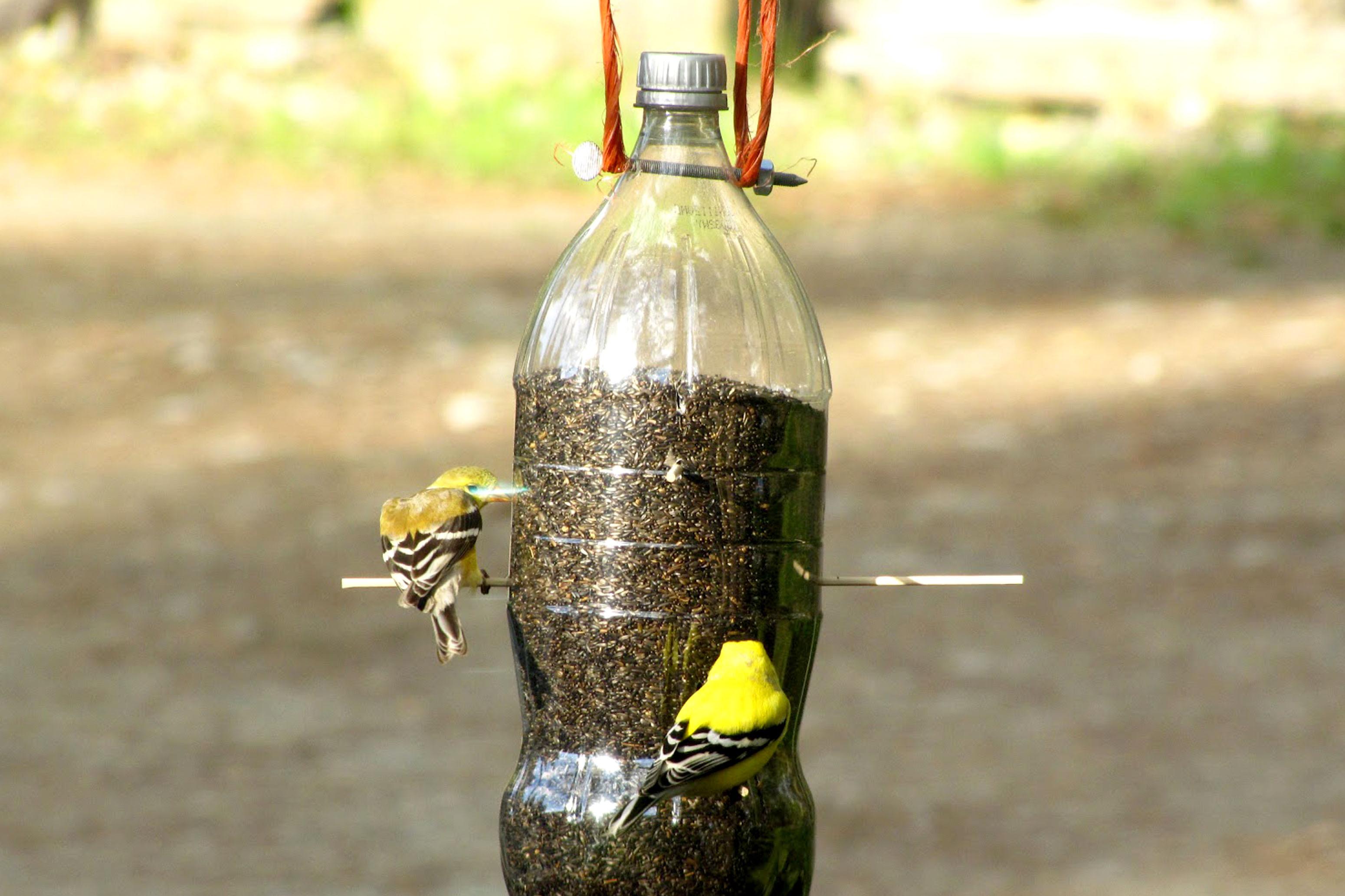 Build a birdfeeder go green brooklyn for How to make a bottle bird feeder