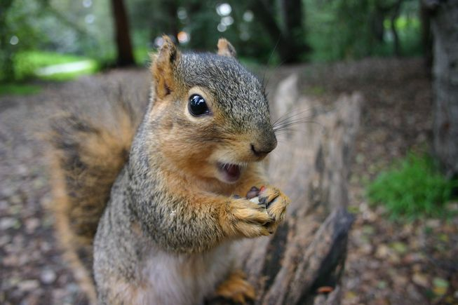 Wildlife Viewing: City Squirrels