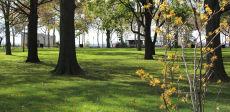 Tree Planting @ Battery Park