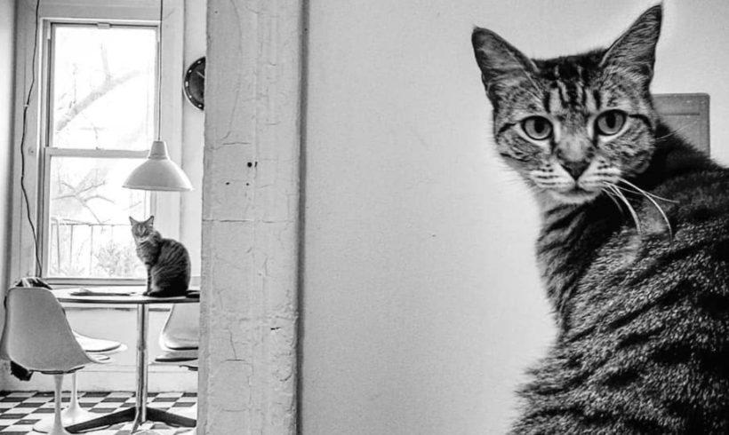 Greenpoint Cat Club