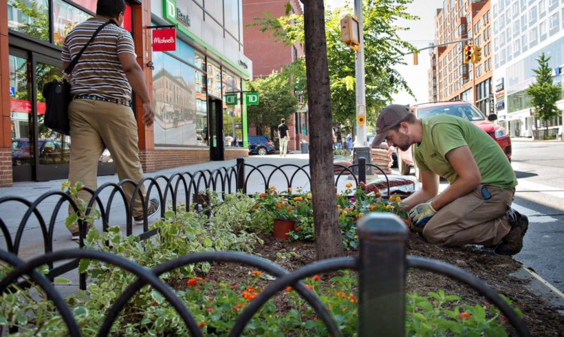 Tree Stewardship on Russell Street | Horticultural Society