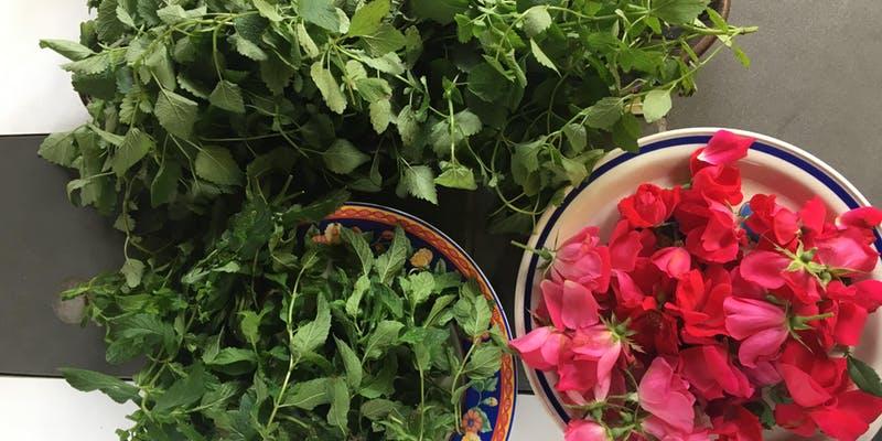 Resultado de imagen para herbs bath